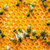 How to Use Honey for Acne: Facts, Tips, and Recipes