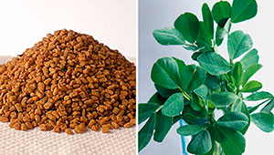 Fenugreek seeds and leaves